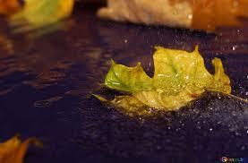 秋雨 秋の雨のデスクトップの壁紙 枝葉 № 34629